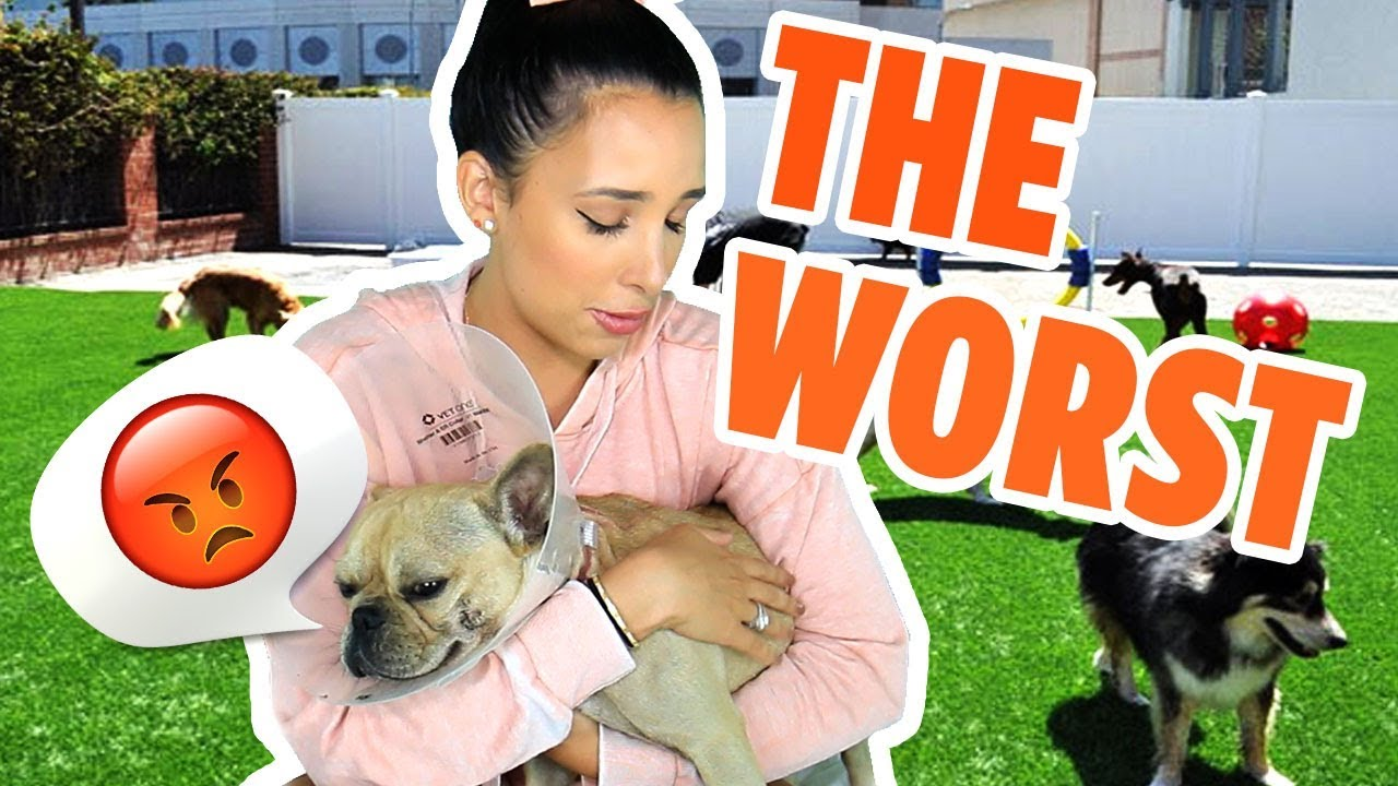 YELP'S 5 STAR REVIEWS ARE LIES! CONSPIRACY THEORY – THE WAGS CLUB HURT MY DOG 😭| Mar